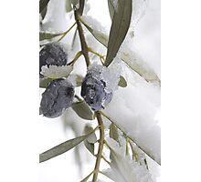 Snow Olives Photographic Print