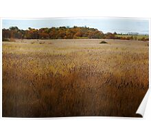 Dunwich Reed Beds Poster