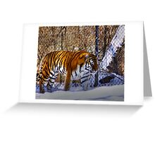 Tiger, Tiger in your tank? Greeting Card