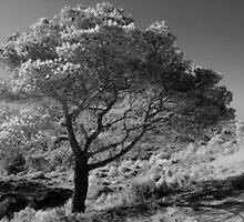 Infrared tree by Joeblack