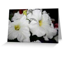 Pearl White Greeting Card