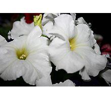 Pearl White Photographic Print