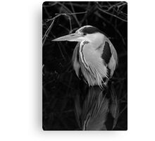 Black and white Heron Canvas Print