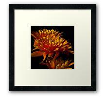 Floral contrasts orange Framed Print