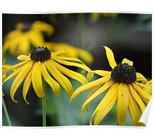 Blacke Eyed Susans wildflowers Poster