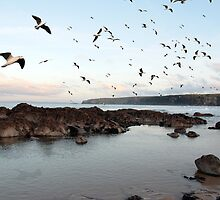 ballybunion seabirds by morrbyte