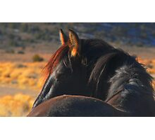 A Wild Horse Called Wisdom Photographic Print