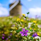The Windmill of Beauvoir - Normandy, France by Yen Baet