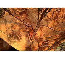 Tree & Boulder Photographic Print