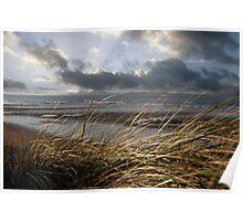beale reeds on the west coast of Ireland Poster