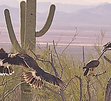 A Desert Family 2 by Judy Grant