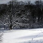 """After the Blizzard by Christine """"Xine"""" Segalas"""