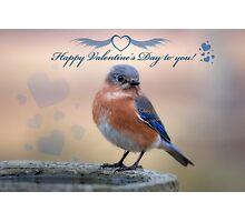 Happy Valentine's Day to you! Photographic Print