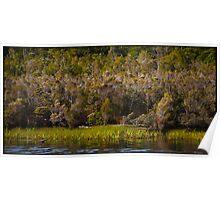 Gordon River Tasmania Poster