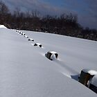 """Buried Posts by Christine """"Xine"""" Segalas"""