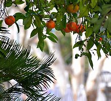 soller oranges by phseven