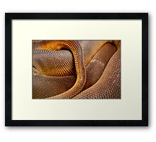 Texture Detail of Coiled Snake Skin Scales Pattern Framed Print
