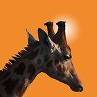 Giraffe on orange background by Peter Elliott