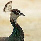 Mrs Peacock by Joy Rensch
