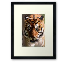 Portrait of a Striped Royal Bengal Tiger of India Framed Print