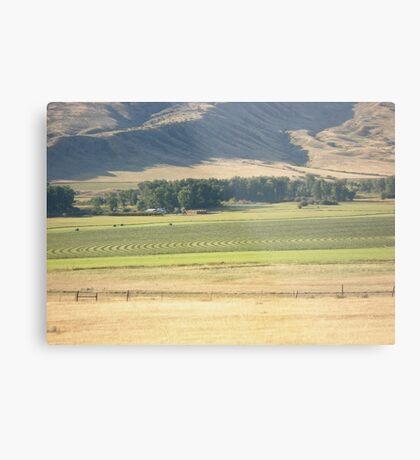 Alfalfa Field in Montana Metal Print