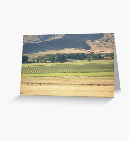 Alfalfa Field in Montana Greeting Card