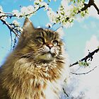Oaty and Apple blossoms. by Lonnie Ornie