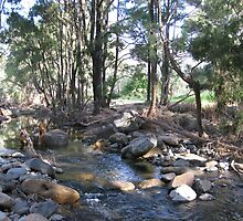 Creek after the floods. by Marilyn Baldey