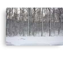 Snowstorm Aftermath Canvas Print