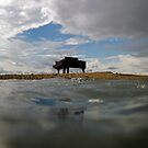 Sandbar Piano - Biscayne Bay Miami by James and Karla Murray