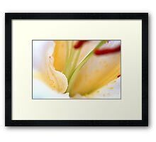 White Cream Delicate Lily Flower with Burgundy Red Stamen Framed Print