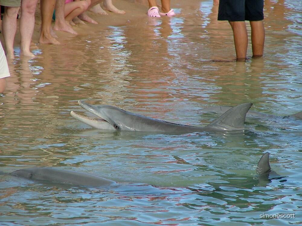 Monkey Mia Dolphins by simonescott