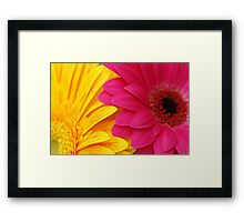 Golden Yellow Hot Pink Bright Gerbera Daisy Petals Framed Print