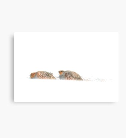 Gray Partridge Canvas Print