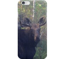 Maine Bull Moose in the woods at dawn iPhone Case/Skin