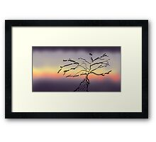 Tree and colour Framed Print