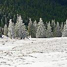 Winter's Edge by demigod