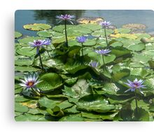 Cluster of Water Lilies and Lily Pads Metal Print