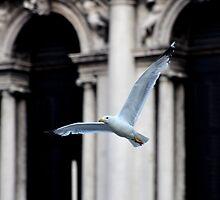 Freedom in the sky ... by Tarek Solh