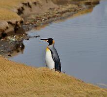 King Penguin by Milonk