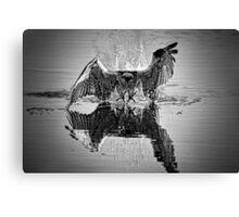 Osprey BW Canvas Print