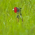 Cock Pheasant in long grass. by Richard Bowler