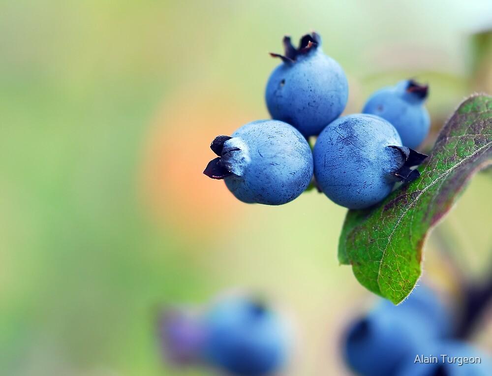 Blueberries by Alain Turgeon
