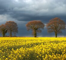 ~ Storm approaching rape field by Christopher Cullen