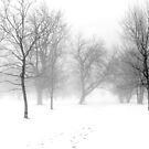 Snow, Fog and Trees by Lisa Cook