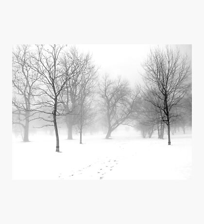 Snow, Fog and Trees Photographic Print
