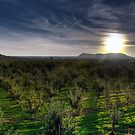 Sunrise over the Orchard by Alain Turgeon