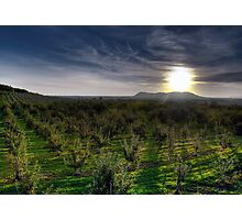 Sunrise over the Orchard Photographic Print