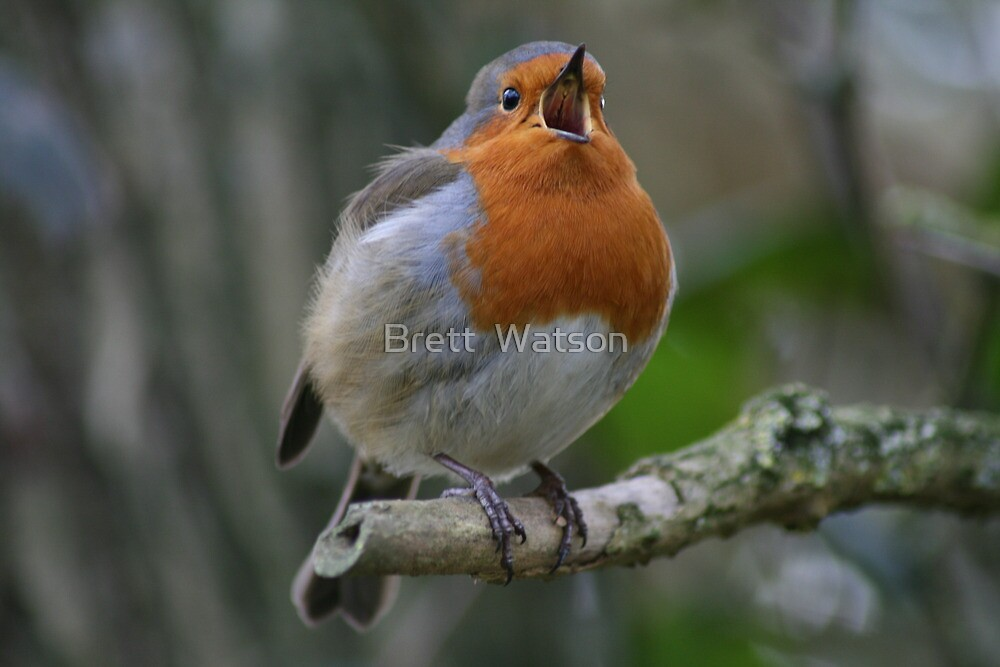 robin  by Brett Watson Stand By Me  Ethiopia