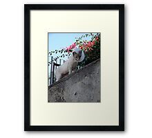 Defiant Accessory  Framed Print